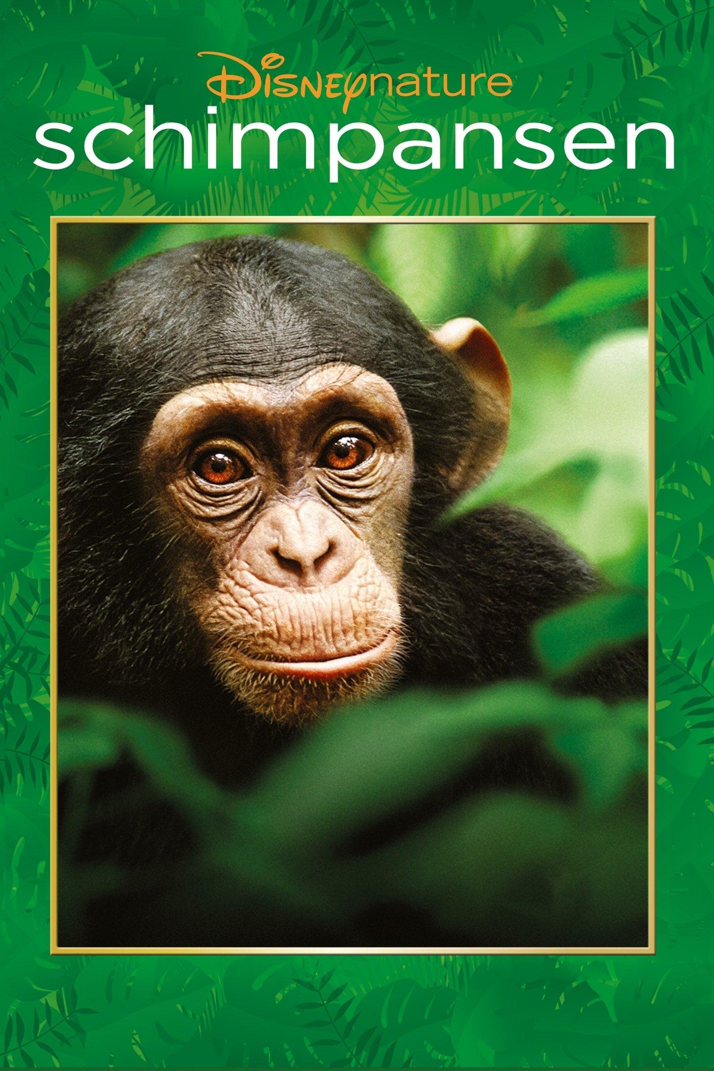 """Plakat von """"Schimpansen"""""""